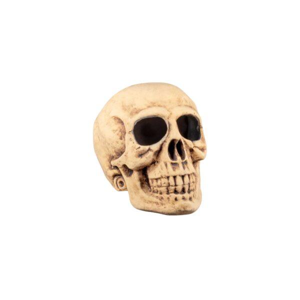 Skull-Bighead